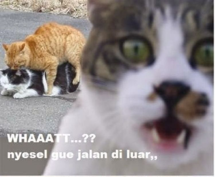 750xauto 25 meme kucing yang imut ngegemesin dan bikin ketawa 150623c