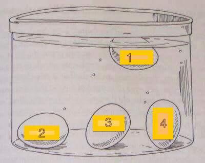 Cara sederhana ketahui usia telur