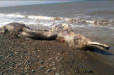 Spesies aneh terdampar di pantai Rusia, bentuknya bikin merinding!