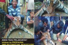 Setelah Orangutan, muncul lagi pembantaian harimau Sumatera