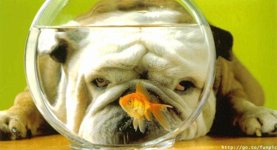 Usir stres kamu dengan melihat potret-potret lucu hewan ini