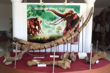 Patiayam, situs purbakala baru yang kini sudah simpan 2.471 fosil