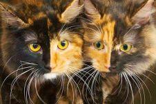 11 Hewan dengan warna mutasi unik di dunia
