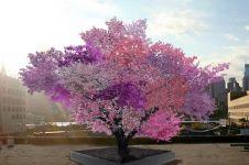 Satu pohon ini hasilkan 40 buah berbeda, bikin orang takjub!