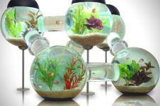 Penelitian mengungkap melihat ikan di akuarium baik untuk kesehatan