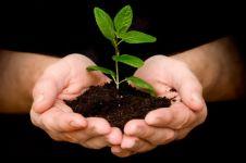 8 Alasan genting kamu wajib menanam pohon mulai detik ini juga
