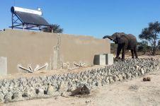 Waduh, gajah ini minumnya air toilet!
