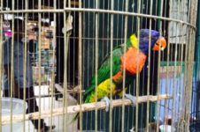 Sediakan aneka spesies burung, pasar ini jadi jujugan turis asing