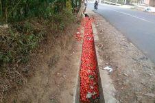 Hanya Rp 200/kg, petani Garut buang tomat di selokan