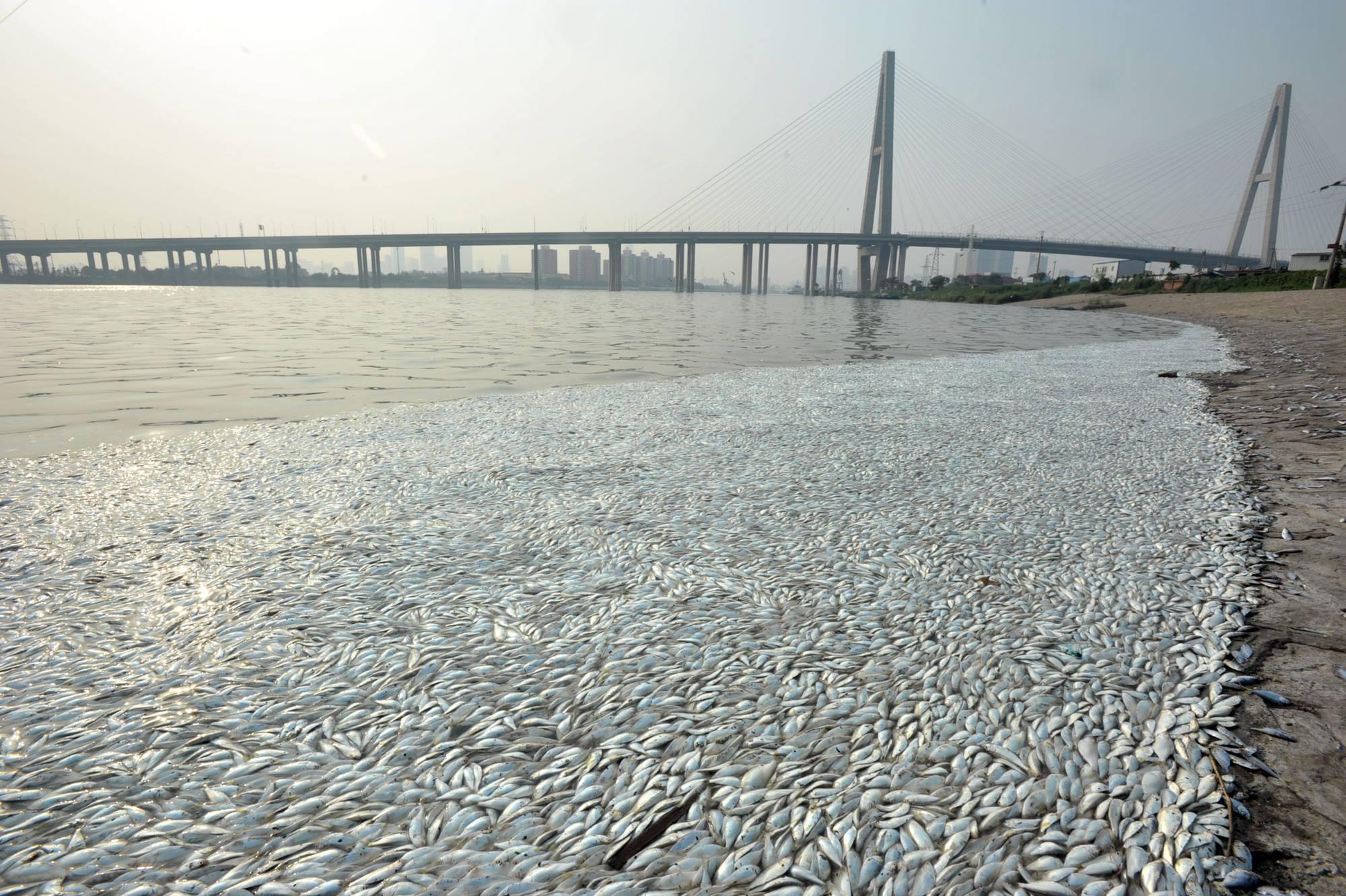 Ribuan ikan mati terdampar di tengah kota, fenomena apa ini?