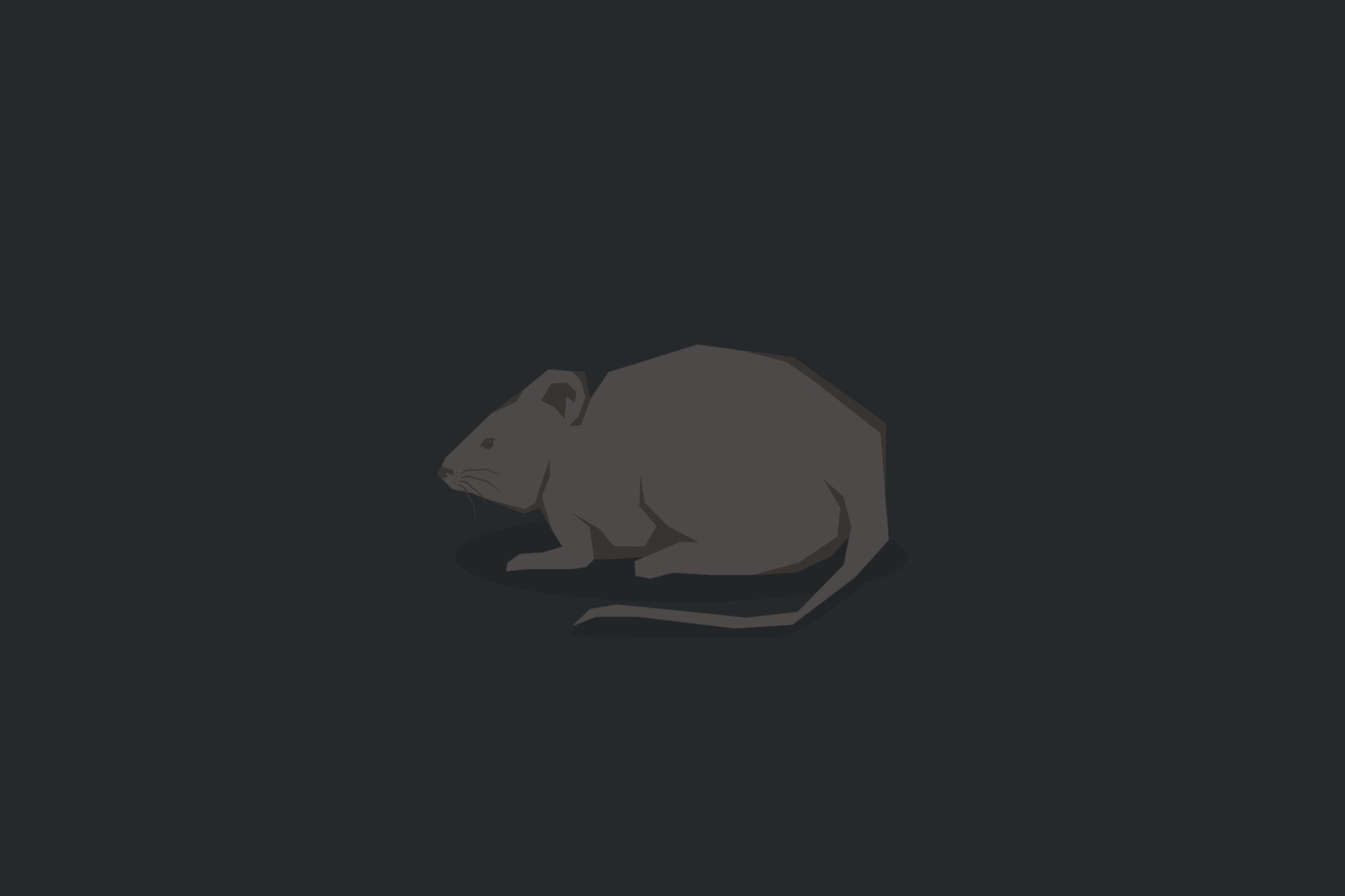 VIDEO: Bahaya, tikus ternyata punya jalan mudah masuk kamar mandimu!