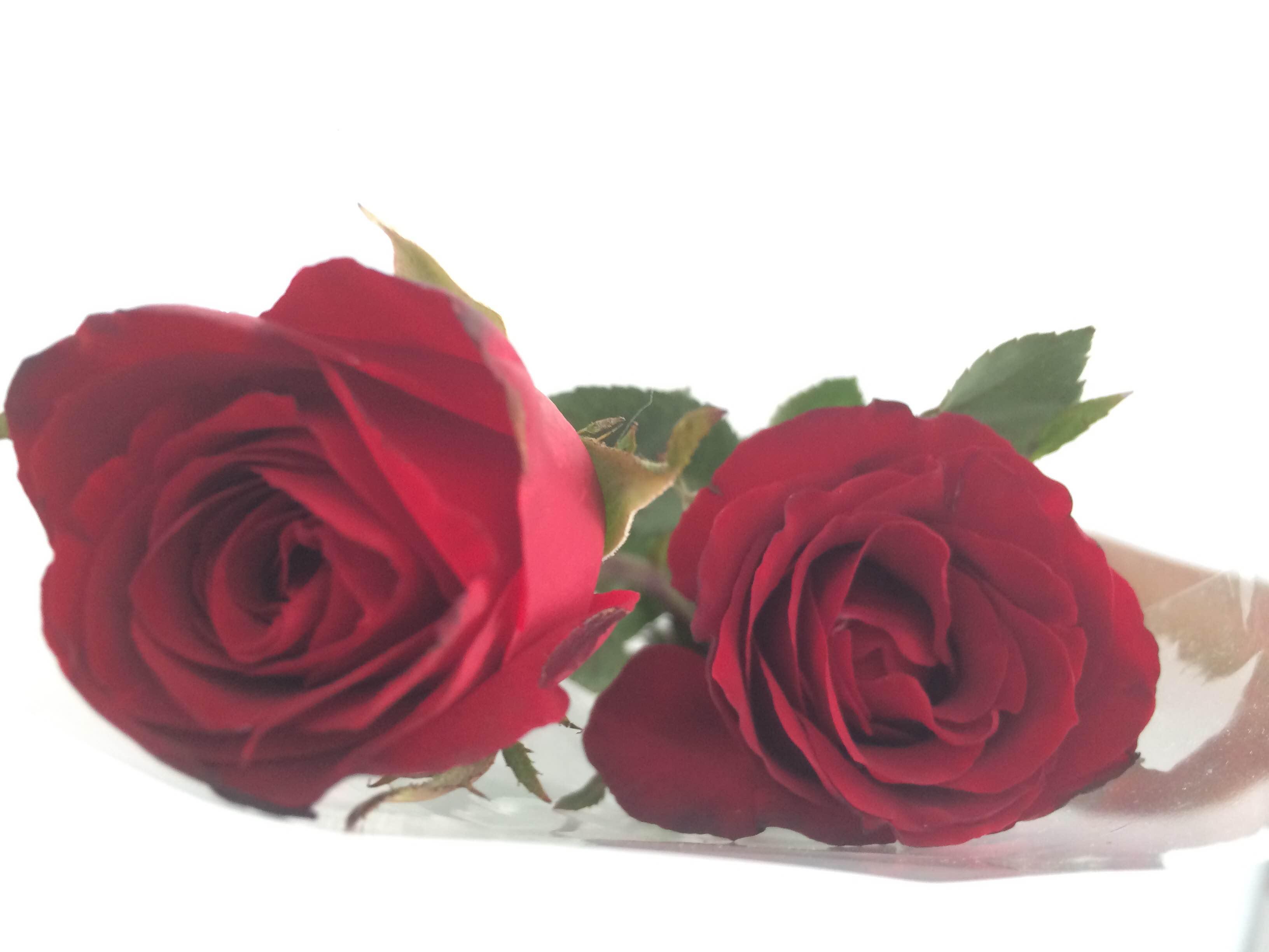 Anak muda masa kini pakai bunga untuk ekspresi cinta, kamu bagaimana?