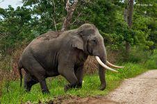 Seorang insinyur menjadi korban balas dendam gajah liar
