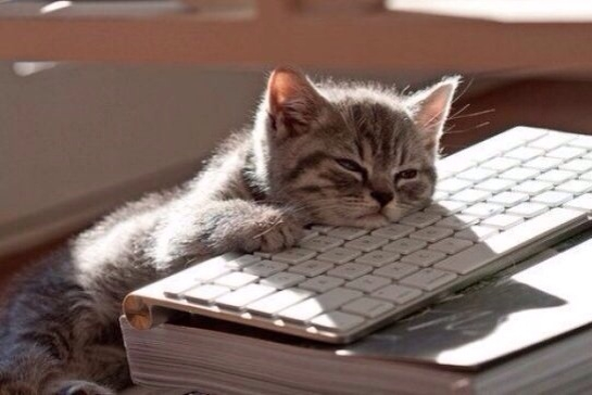 Ingin baca perasaan kucing lewat gerak-gerik tubuhnya? Begini caranya