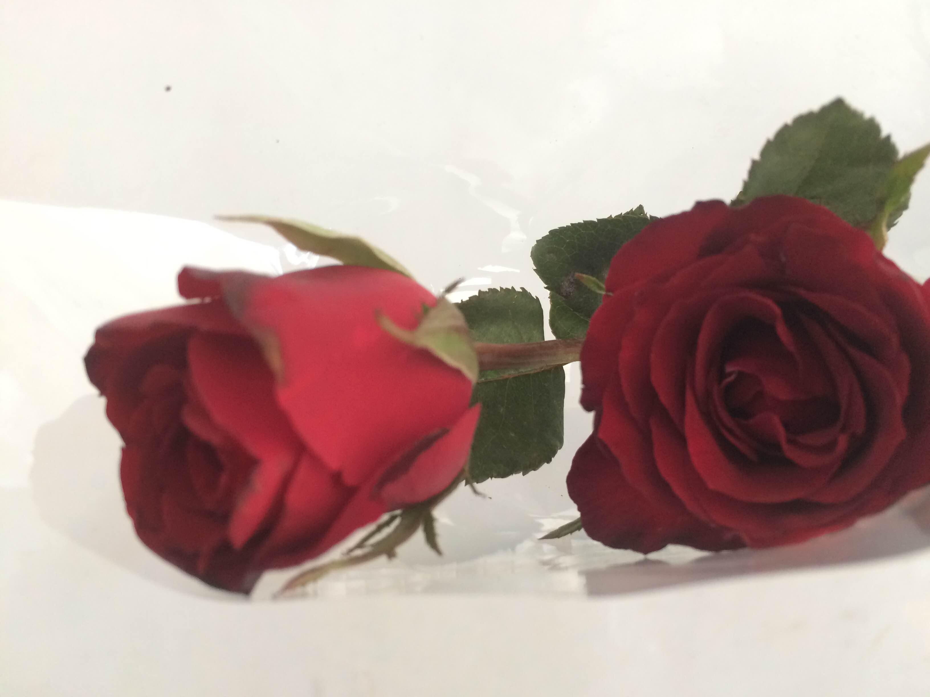 Bagian Bagian Bunga Mawar Beserta Fungsinya Berbagai Bagian Penting