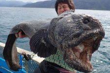 Nelayan heboh dengan penangkapan ikan raksasa, hewan apakah ini?