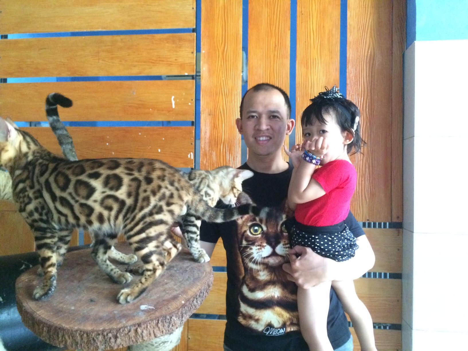 Kisah Rio, pembiak kucing mirip macan tutul satu-satunya di Jogja