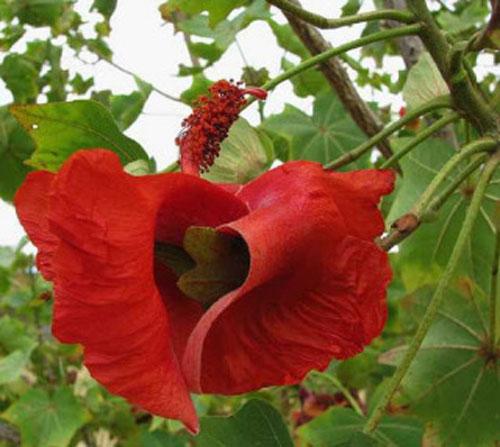 Ini Dia Bunga Bunga Langka Yang Ada Di Dunia Dari Indonesia Ada