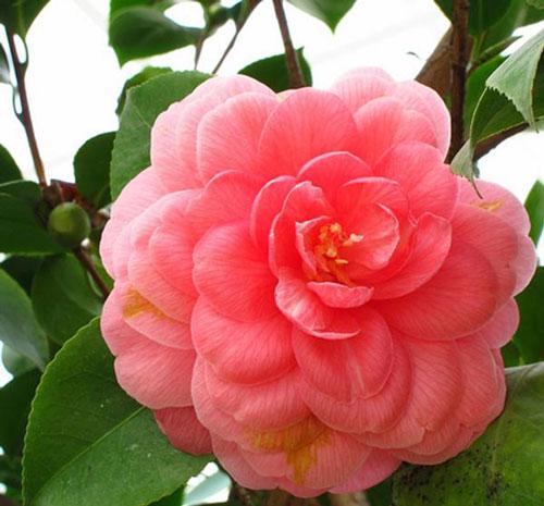 Ini dia bunga-bunga langka yang ada di dunia, dari Indonesia ada lho
