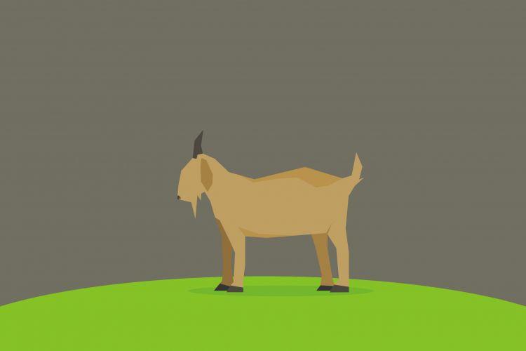 Kamu harus tiru keberanian kambing ini, lawan sapi pun nggak mundur!