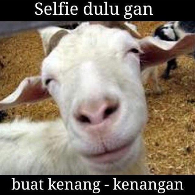 21 Meme pesan pesan terakhir kambing dan sapi sebelum ksekusi