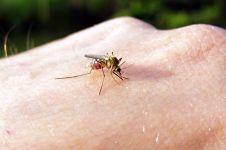 VIDEO: Gigitan serangga sebetulnya tidak bikin gatal