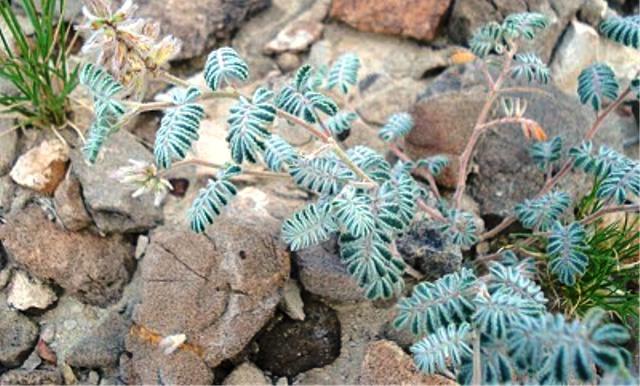 Ini dia tumbuhan langka di dunia, menakjubkan!