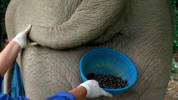 9 Teknik pengolahan kopi termasyhur di dunia, kamu harus coba semuanya