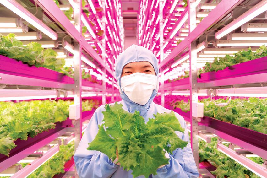 Ini 5 Hal Yang Membuat Pertanian Di Jepang Begitu Maju