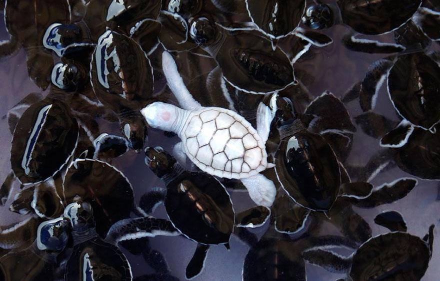 Tidak hanya manusia, hewan juga ada yang Albino