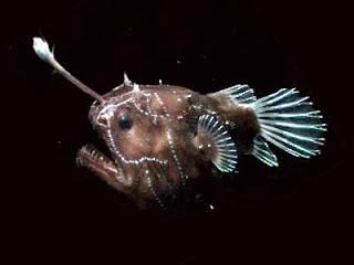Deretan ikan menyeramkan yang sanggup menyerang ikan besar