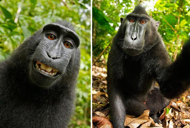 8 Foto selfie ini disebut paling fenomenal di internet, bikin heboh!