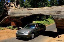 Terowongan-terowongan ini terbentuk dari pohon tumbang, keren!
