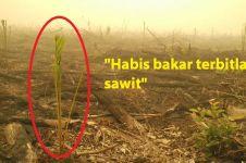 Netizen marah, lahan bekas kebakaran sudah ditanami kelapa sawit