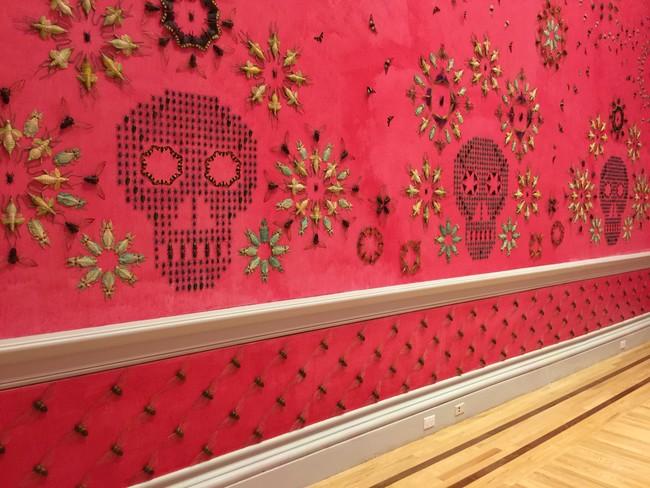 Kagum, serangga mati ini malah dijadikan wallpaper, kamu tertarik?