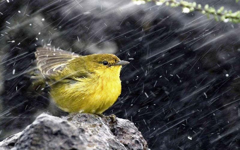 10 Fakta aneh tentang hujan, selain genangan juga sebabkan kenangan