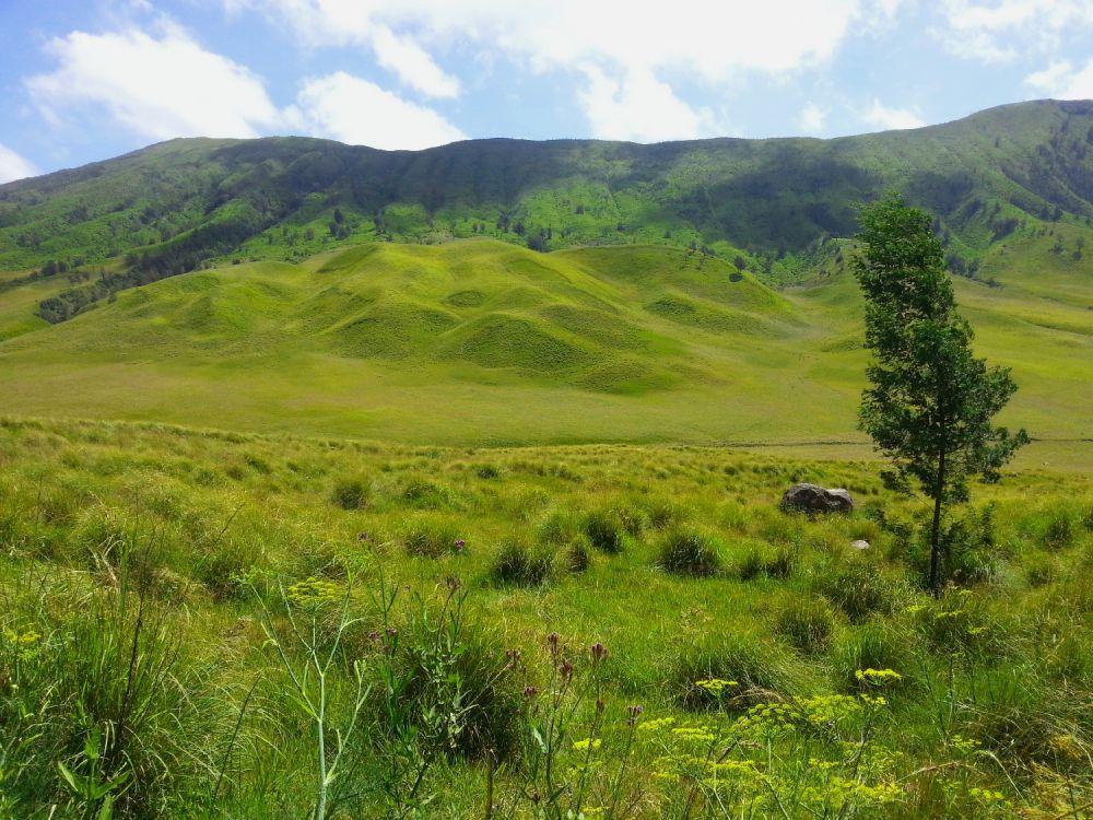 10 Padang savana terindah di Indonesia, kamu wajib kunjungi