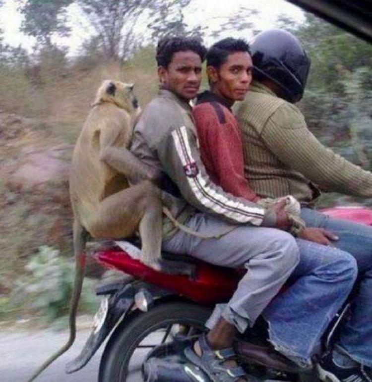 Foto 27 Konyol Dan Lucu Yang Hanya Ada Di India