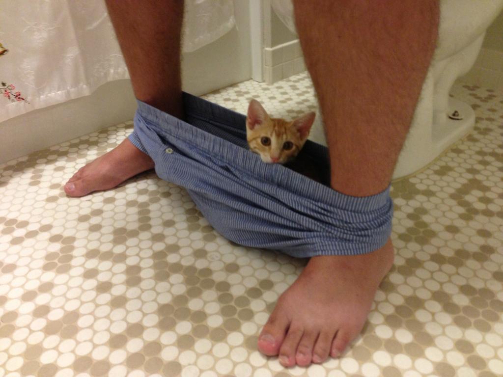 20 Foto kucing kalau lagi caper sama majikannya, bikin gemas!