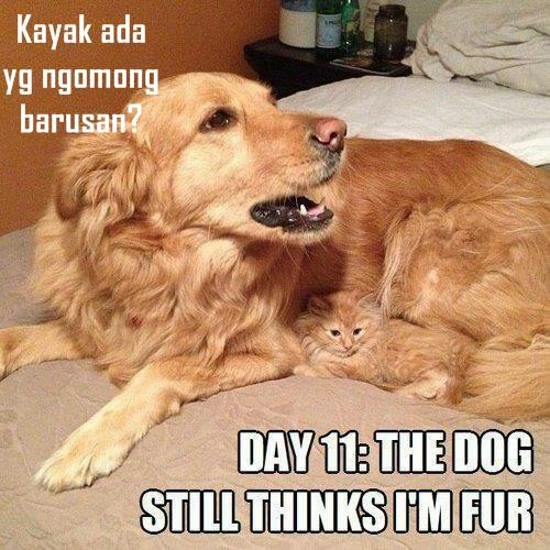30 Meme Kocak Kucing Vs Anjing Yang Bikin Ketawa Ngakak