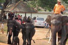 Kini ada rumah sakit khusus gajah di Indonesia