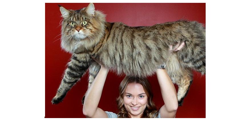 20 Hewan raksasa ini tak disangka hidup di sekitarmu, sumpah ngeri!