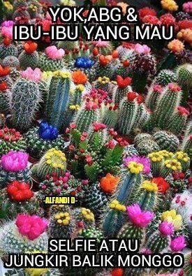 16 Meme Kocak Sindir Para Perusak Keindahan Taman Bunga Amarillys