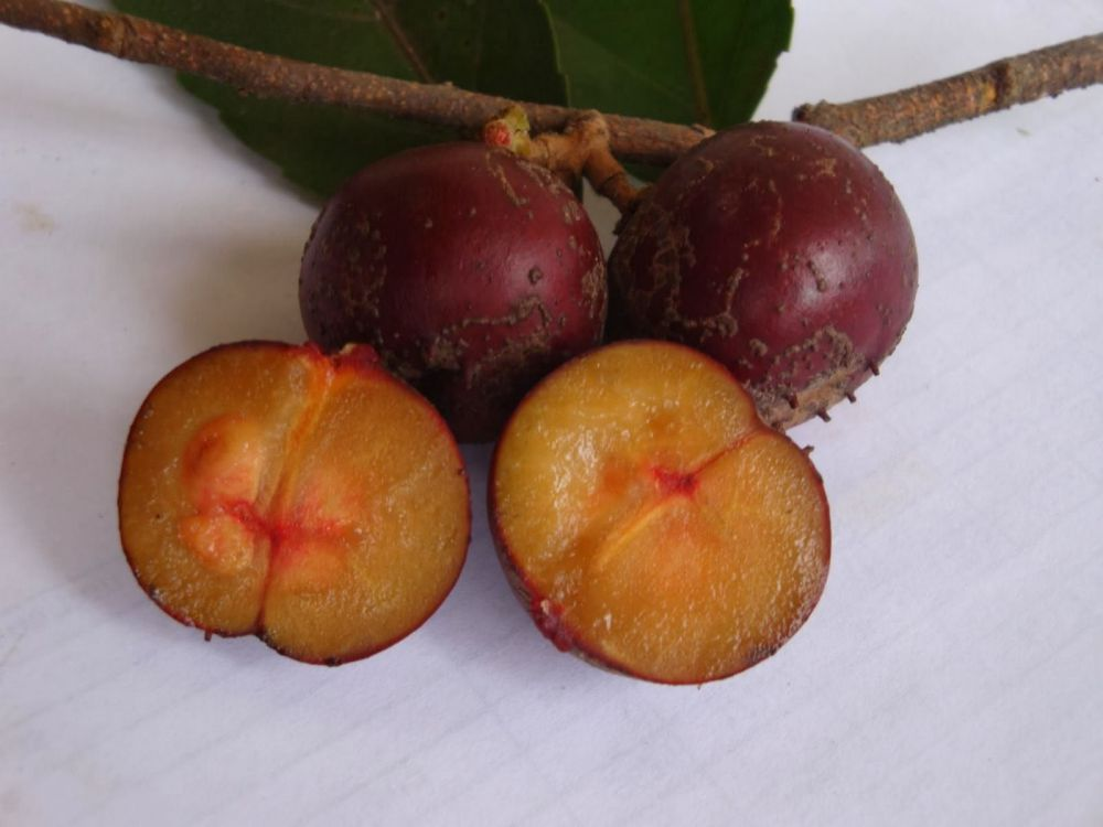15 Buah-buahan langka yang kini banyak dirindukan