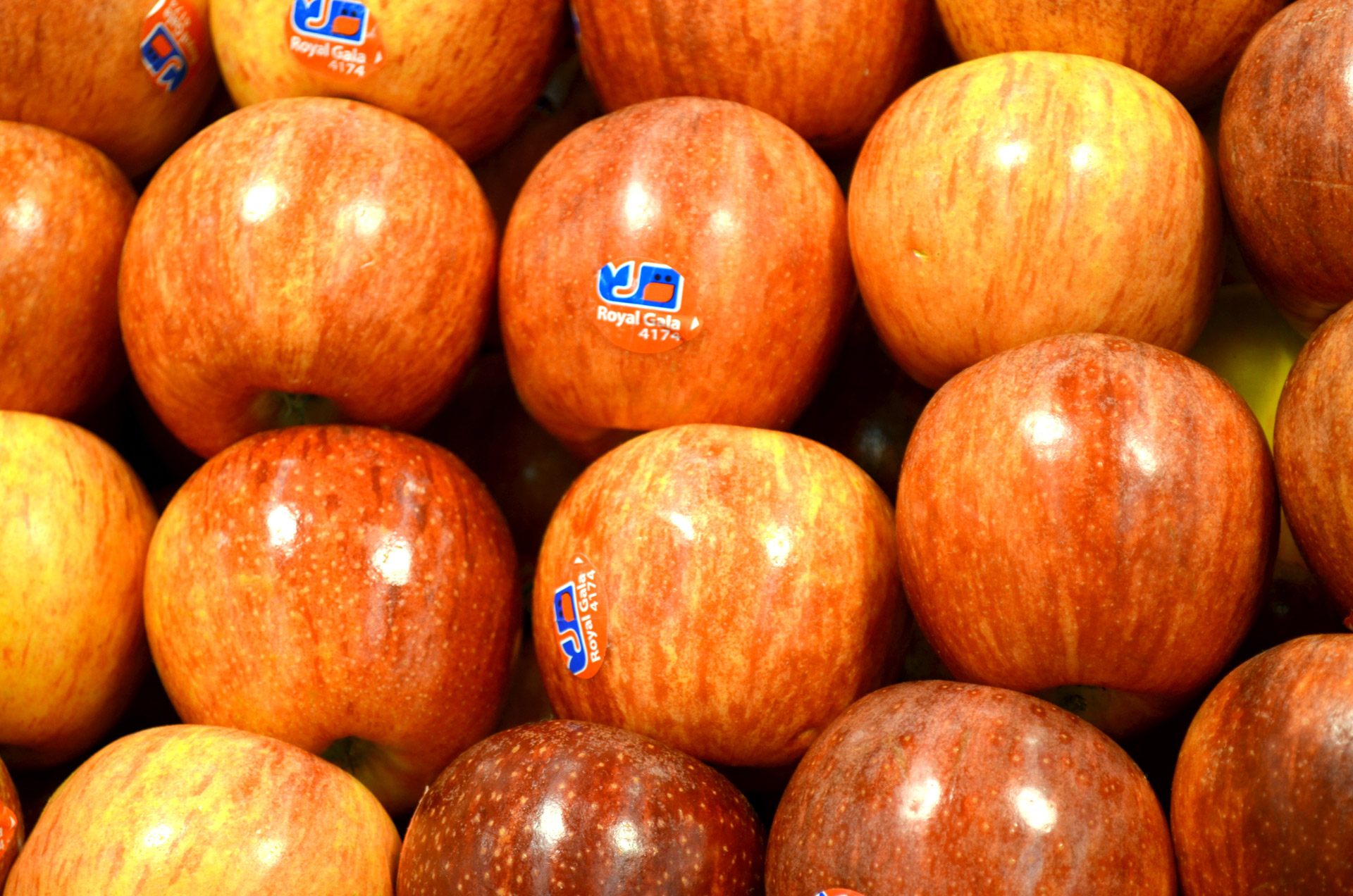 10 Jenis apel ini pasti pernah kamu cicipi, mana yang favorit?