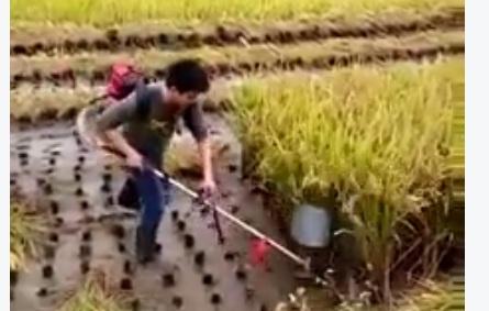 VIDEO: Memanen padi semudah ini, kapan diterapkan petani Indonesia?