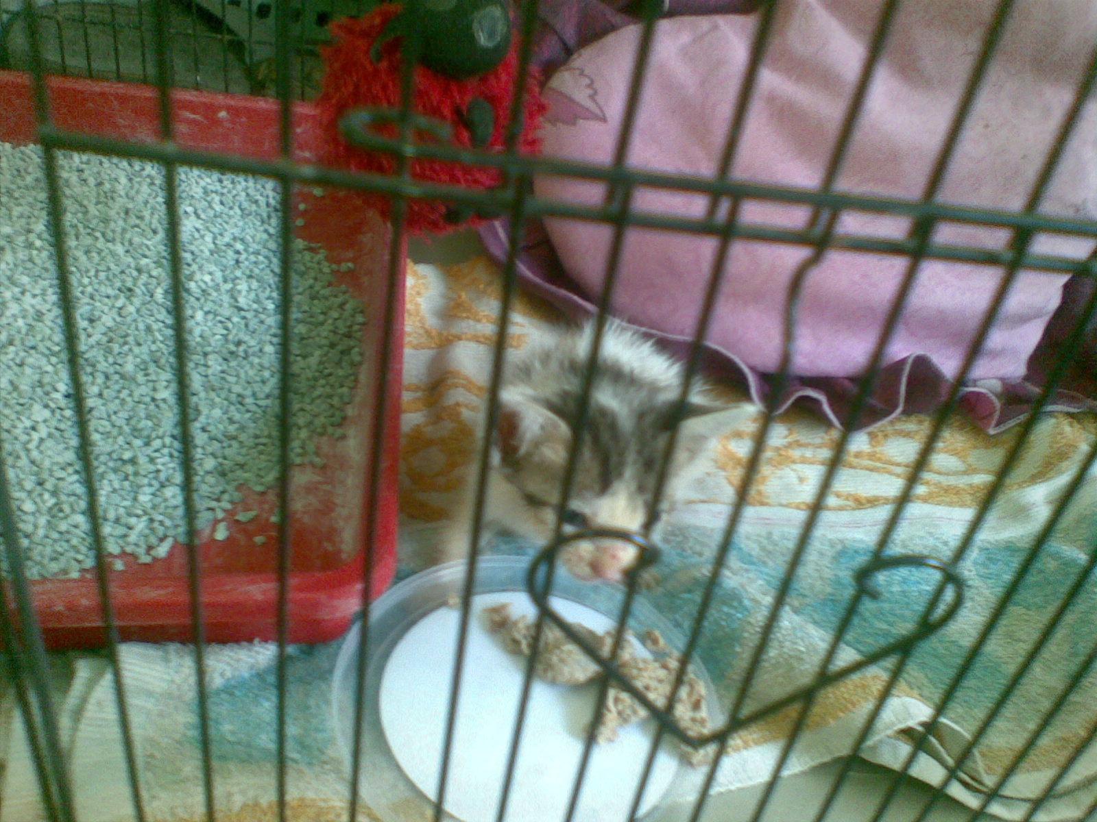 Krucil: Kucing yang kembali ke rumah setelah seminggu dibuang ke pasar