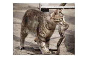 Pelihara kucing ternyata mencegah ular masuk ke rumah, kok bisa?