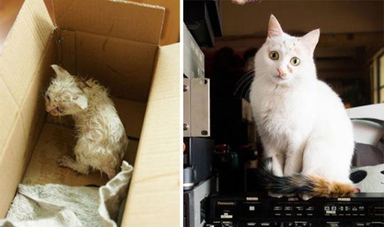 Foto Bukti Jika Kucing Diadopsi Orang Yang Tepat Bertambah Lucu
