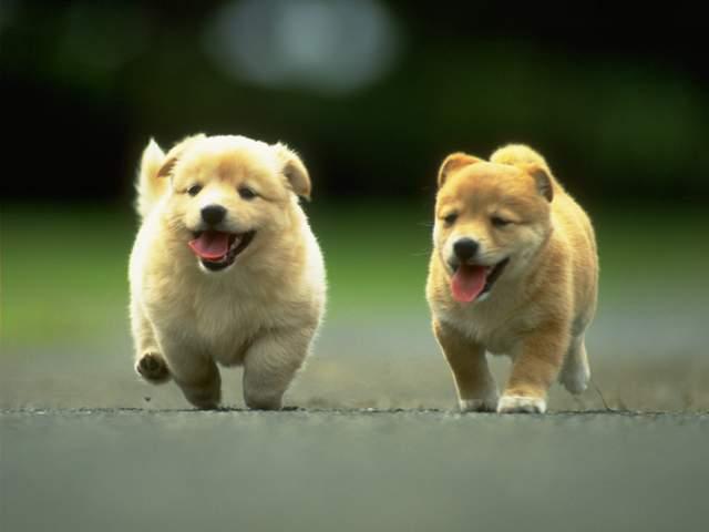 8 Bahasa tubuh anjing ini ternyata berisi pesan penting, pahami ya!